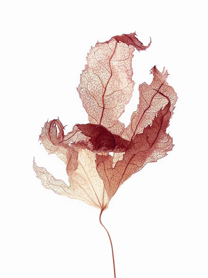 Dried leaf 2.jpg
